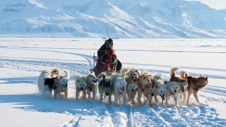 inuit dogs