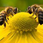 Μέλισσες 2